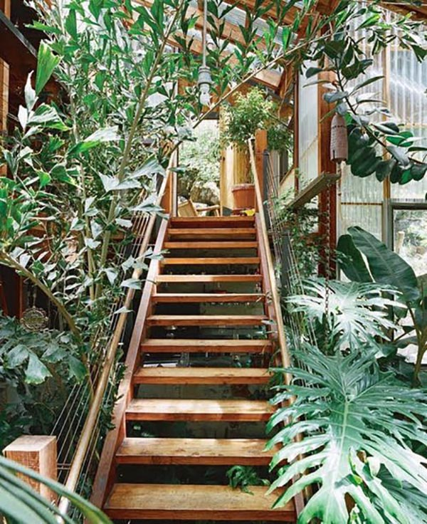 jungla en casa